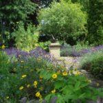 Physic Garden in bloo