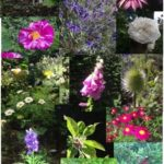 Collage of plants in the Physic Garden